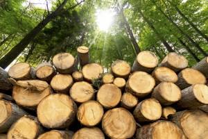 Biomasse Anlagestiftung AST FEE Schweiz Swiss